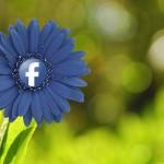 Social Media Marketing für Gärtner und Floristen